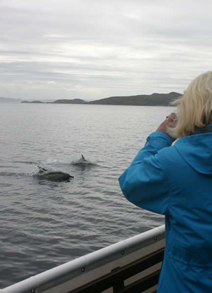 Dolphin Watching at Ullapool